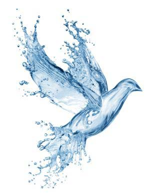 Water dove spirit