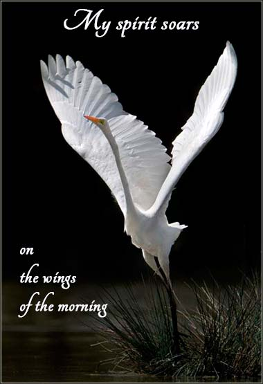 white swan, My spirit soars on the wings of the morning, Velva Barnes