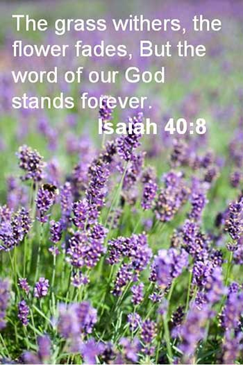 The grass withers the flower fades but the word of the Lord stands forever | Isaiah