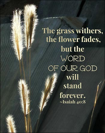 The grass withers and the flower fades, but the Word of God endures forever.